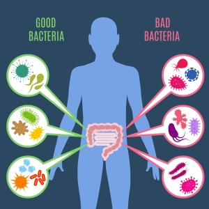 Ways to improve your gut bacteria
